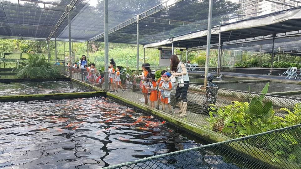 Mainland Tropical Fish Farm